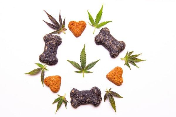 bigstock-Dog-treats-and-cannabis-leaves-299962909_600x400-min