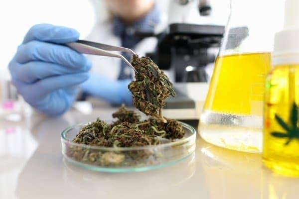 What is Cannabinol?