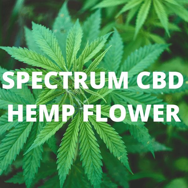 Spectrum hemp flower
